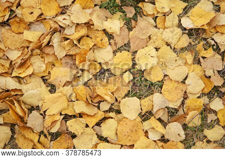 Yellow Leaves On The Dry Grass. Autumn Background
