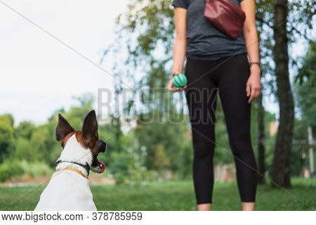 Dog In The Park Playing With The Owner. Exercising With Pets, Dog Obedience Training, Spending Time