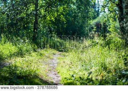 Footpath In The Summer Forest. Sunny Day, Nature