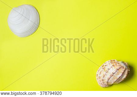 Seashells On A Yellow Background. Two Seashells Lie On Opposite Sides Of The Image. Marine Concept.