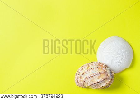 Seashells On A Yellow Background. Two Seashells Lie In The Corner Of The Image. Marine Concept. Ther