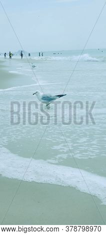 Bird Seagull Sitting By The Beach. Wild Seagull With Natural Soft Blue Background.