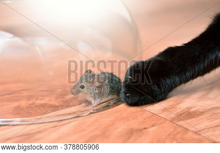 The Cat Catches The Mouse And Cannot Catch, The Mouse Is Protected