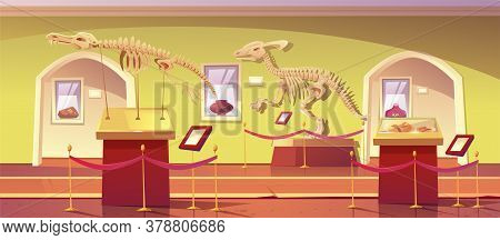 Museum Of History With Dinosaur Skeletons, Ancient Insects In Amber, Clay Pot And Dino Fossils. Arti