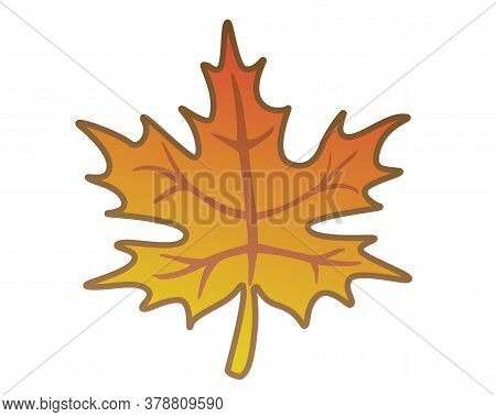 Maple Leaf - Vector Full Color Illustration. Autumn Orange Maple Leaf.