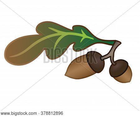 Acorns And Oak Leaf - Vector Full Color Illustration. Autumn Oak Leaf And Two Acorns. Oak Branch