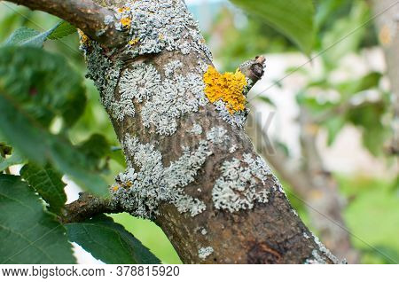 Processing Of A Sick Tree, Damage On A Tree Trunk.