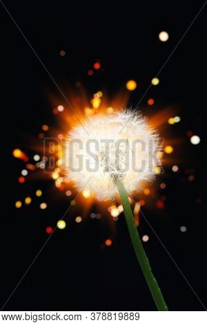 dandelion flower on shiny firework background