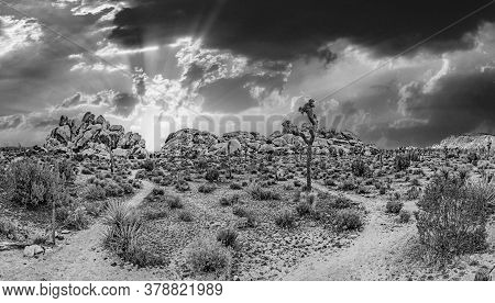 Landscape With Joshua Trees In The Desert