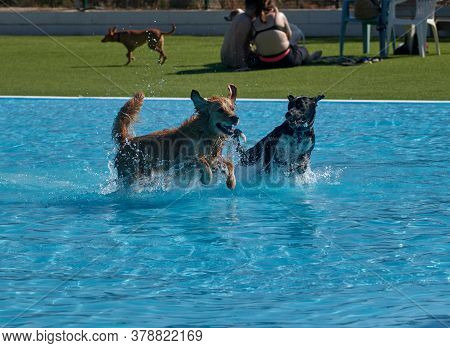 Dog Playing And Swimming In The Pool