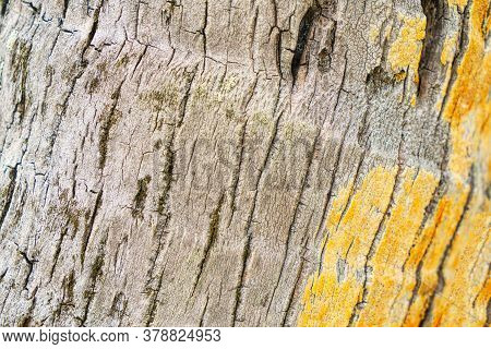 Closeup Of The Bark Of A Tropical Tree. Texture.