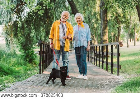 Selective Focus Of Smiling Elderly Couple With Pug Dog On Leash Walking In Park During Summer