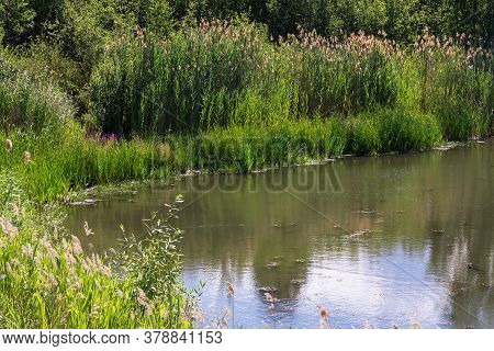 A Picturesque Backwater Of A Reservoir, The Shore Of A Pond Or Lake With Coastal Plants With Reeds,