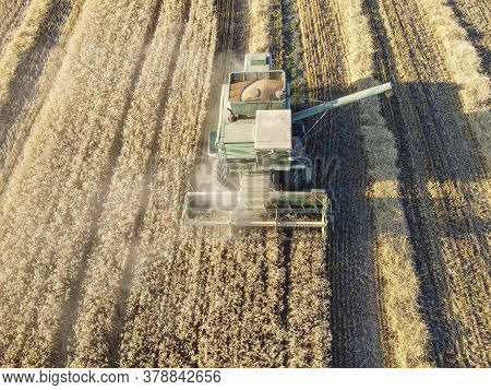 The Combine Harvests Wheat, Grain In The Hopper, Dust Rising From The Work Of The Combine In The Fie