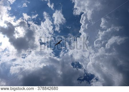 Seagull Silhouette In Blue Sky Clouds. Seagull Flying In Blue Sky In A Sunny Day