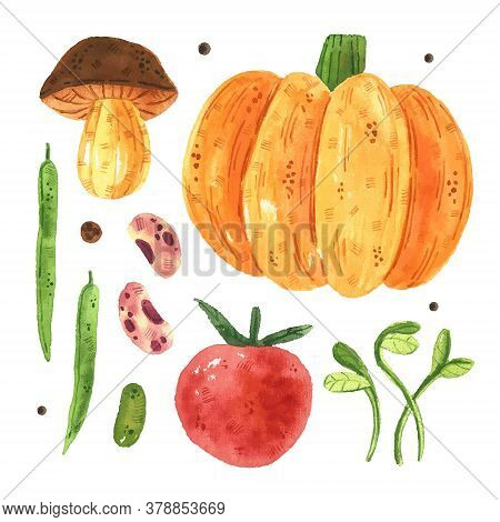 Pumpkin, Mushroom, Tomato, Pea, Bean, Micro Green. Vegetables Clip Art, Set.  Watercolor Illustratio