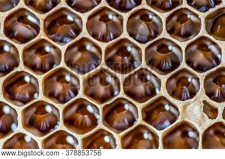 Glossy Yellow Golden Honey Comb Sweet Honeycomb Drips Flow During Harvest Background Honeybee Theme