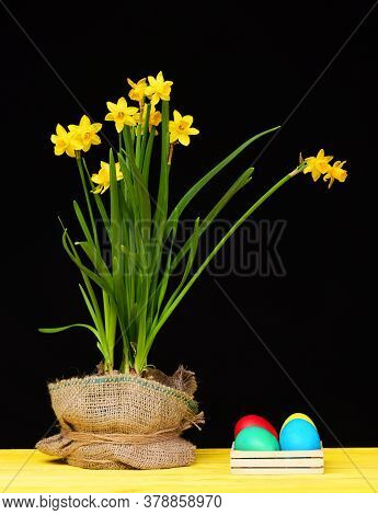 Narcissi Flowers In Sackcloth And Colourful Painted Easter Eggs