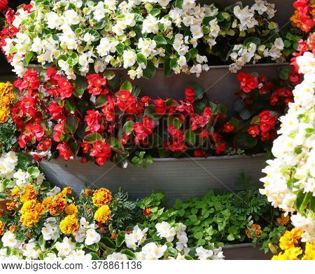 Begonias And Other Flowers In The Large Vertical Flowerbed To Decorate The City