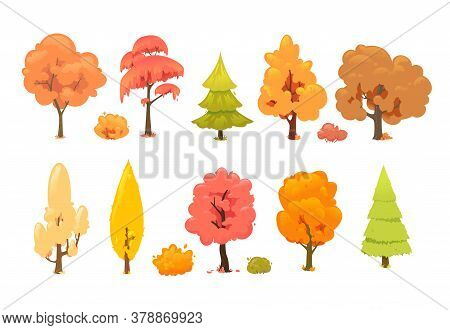 Colorful Autumn Trees. Collection Of Autumn Trees Isolated On White Background. Cartoon Yellow Orang