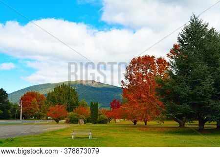 Bright Autumn Colours In Turangi Town Park With Magnificent Mountains Of Tongariro National Park In