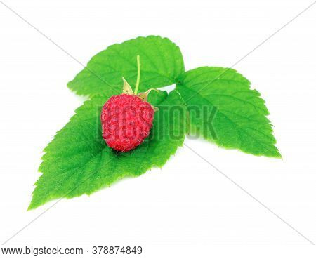 Red Ripe Raspberry With Green Leaves Isolated On A White Background. Healthy Organic Food. Harvest