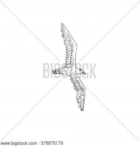 Vector Hand Drawn Doodle Sketch Flying Seagull Isolated On White Background
