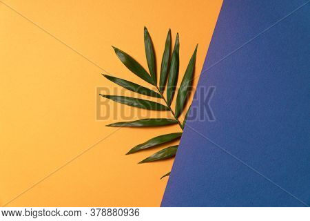 Tropical plant leaf on blue and yellow paper background. Flat lay, top view, minimal design template with copyspace.