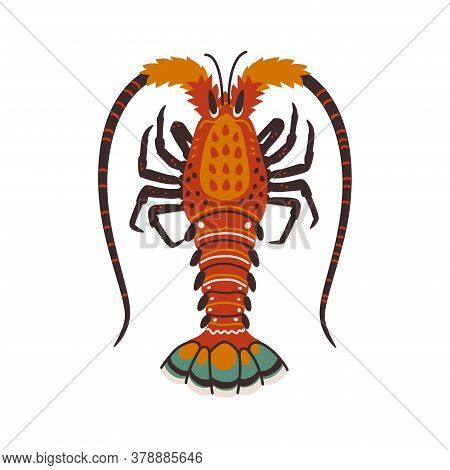 Spiny Lobster, Langouste Or Lobster Or With Long Antennae And Without Claws.