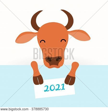 2021 New Year Vector Illustration With Cute Cartoon Ox, Face And Legs, Holding A Card With 2021 Text