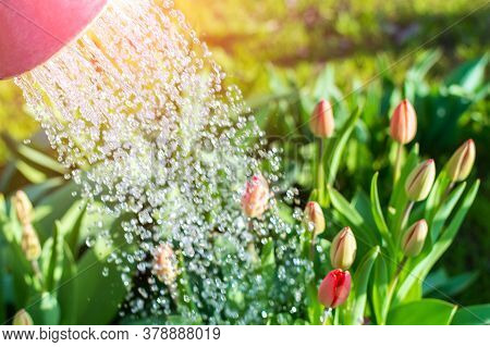 Water With A Blue Watering Can Of Colored Flowers To Give Color And Decorate Your Garden. Concept Of