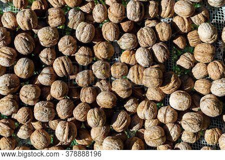 Natural Walnut Nuts Background Texture Abstract Walnuts Heap. Vegetarian Food