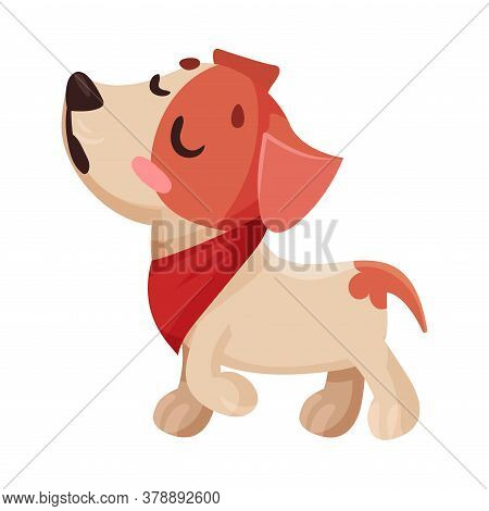 Funny Jack Russell Terrier Character Walking With Dissatisfied Muzzle Vector Illustration