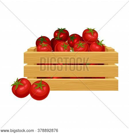 Ripe Tomatoes In Wooden Crate As Product Harvesting For Ketchup Manufacturing Vector Illustration