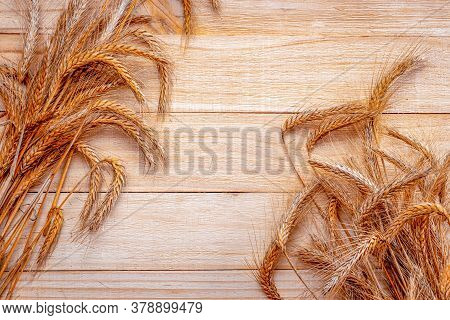 Wheat On Table. Wheat Grain Ear Or Rye Spike Plant Isolated On Brown Wood Plank Background, For Cere