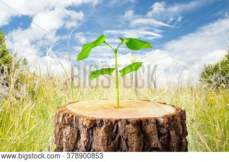 Young Plant In Old Wood, Concept Of New Life. Business Development Symbolic. Ecology Concept.