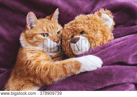 Ginger Cat Hugs A Soft Toy On The Background Of A Blanket.