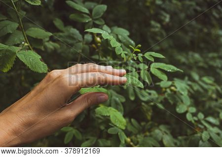 A Female Hand Touches A Branch Of A Deciduous Tree In The Forest. The Concept Of Unity With Nature,