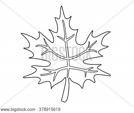 Maple Leaf - Vector Linear Illustration For Coloring. Maple Leaf And Two Acorns - Element For Colori