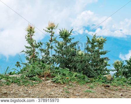 The Bushes And Weeds On The Mountain Range.