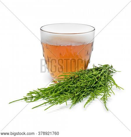 Glas cup with hot field horsetail herbal tea and fresh green twigs close up isolated on white background