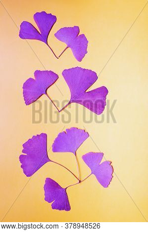 Fan-shaped Leaves Of Ginkgo Tree , Surreal Decorative Background. Copy Space
