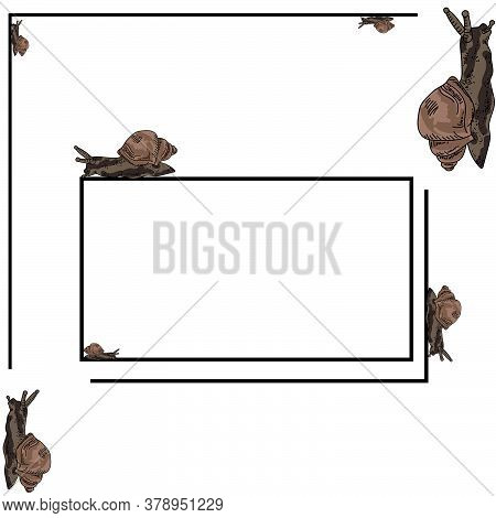 Rectangular Thin Frame For An Inscription With Brown Snails Crawling Around, Vector Illustration On