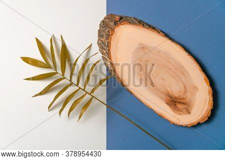 Tropical plant leaf and slice of wood on blue and white paper background. Flat lay, top view, minimal design template with copyspace.