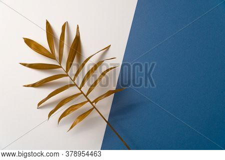 Tropical plant leaf on blue and white paper background. Flat lay, top view, minimal design template with copyspace.