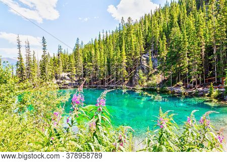 Fireweeds Surround The Emerald-colored Grassi Lakes In The Southern Canadian Rockies Of Canmore, Whi