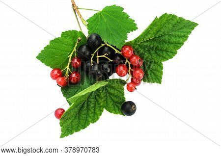 Black And Yellow Currants On Green Leaves. Isolated On A White Background. Assorted Varieties Of Cur