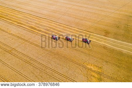 Combine Harvesters Reaping Wheat Top View From A Drone