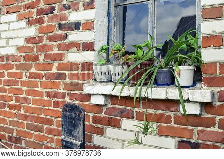 Vases With Indoor Plants Stand On An Old Rural Window Outdoors Against A Red Brick Wall. Row Of Flow