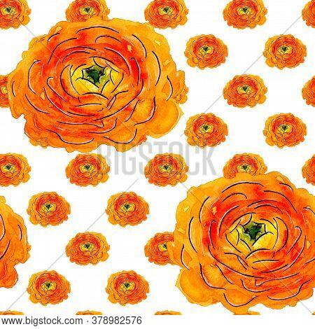 Seamless Pattern Of Hand-drawn Watercolor Yellow Ranunculus On White. Orange Flower With Yellowish-g